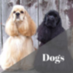 Dogs and doTERRA Essential Oils