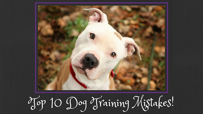Top 10 Dog Training Mistakes