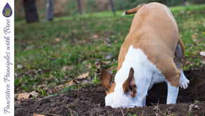Are you training your dog to misbehave?