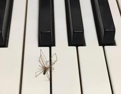 spider on keys