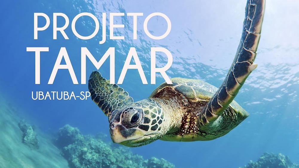 Imagem de divulgação do projeto de conservação de tartarugas marinhas Tamar. Fonte: http://www.tamar.org.br