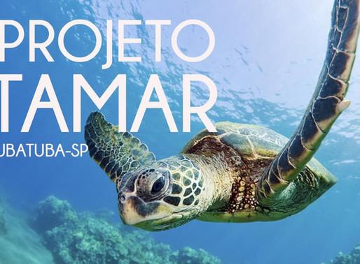 Biologia Marinha: 5 locais para estagiar no Brasil
