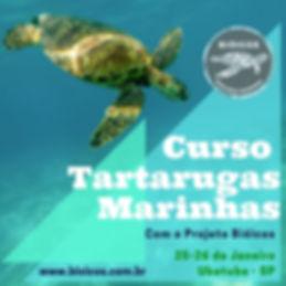 Tartarugas Marinhas.jpg