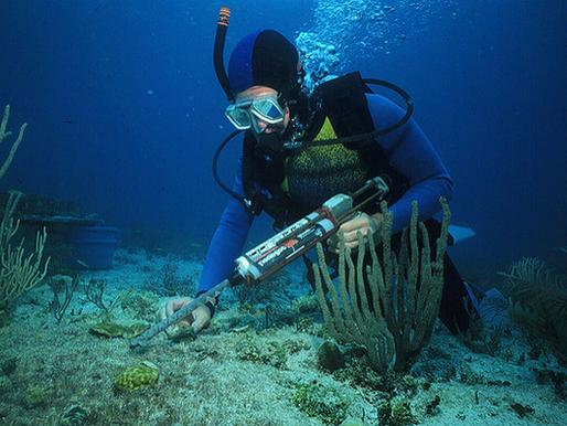 Biologia Marinha: o que fazer e como fazer