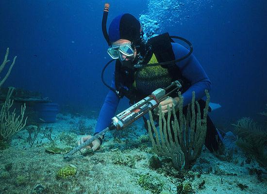 Imagem de um mergulhador com todos os equipamentos no fundo do mar. Ao seu redor há alguns organismos marinhos fixados ao substrato.