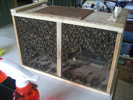 Package Bees, Italian or Russian Hybrids - March 27 - pickup only