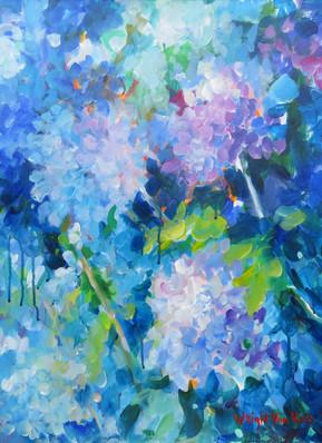 39_Hydrangea, Hortensia