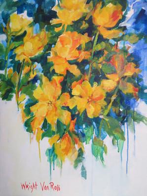 61_Yellow Roses - Roses Jaunes