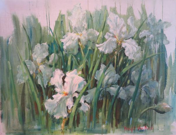 20_White Iris - Iris Blanc