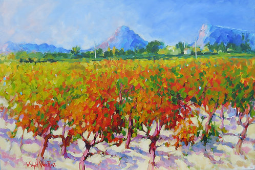 Autumn Vineyard - Pic st Loup