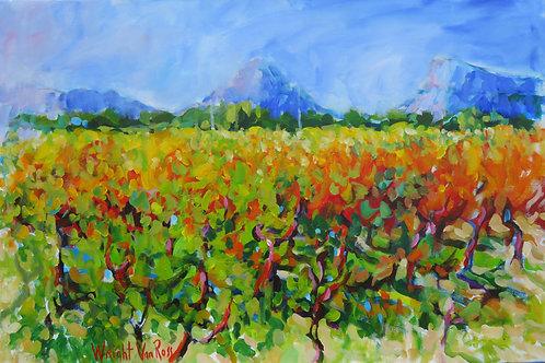 Vineyard Terres des Cambon