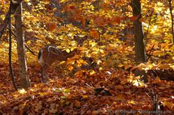 Camouflaged Deer