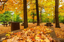 Maple Leaf Picnic.jpg