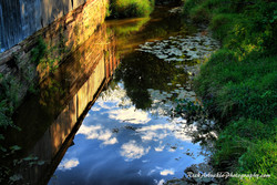 Summer Stream Reflections