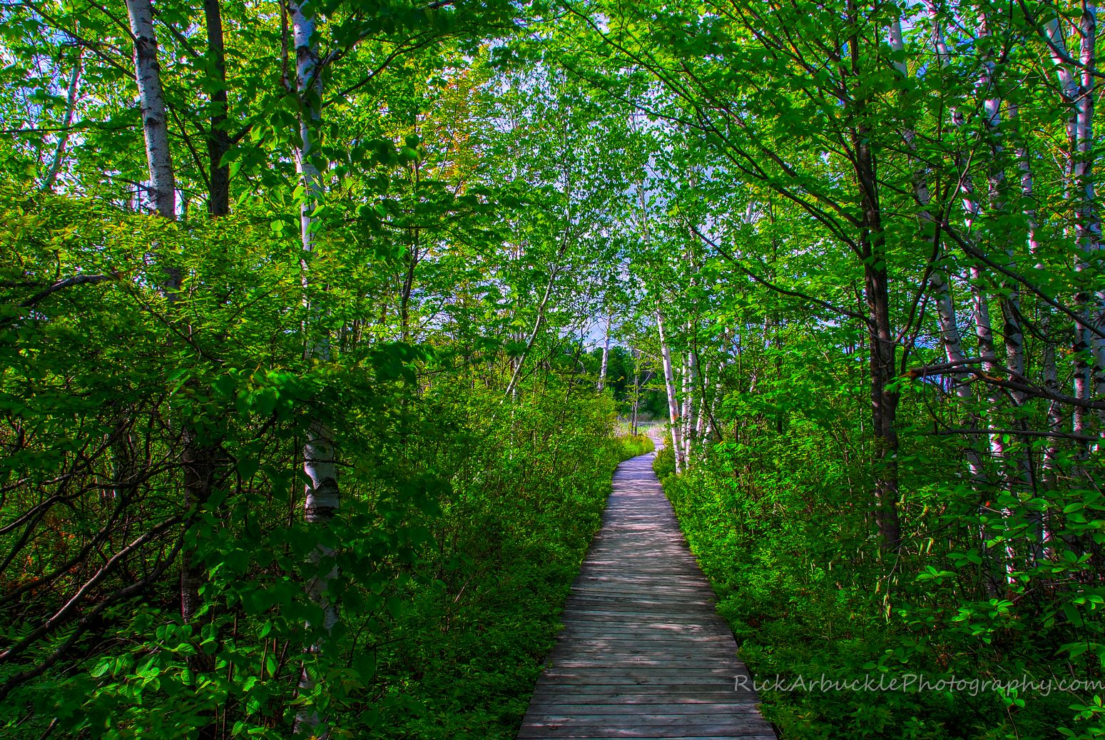 Boardwalk Through The Woods.jpg