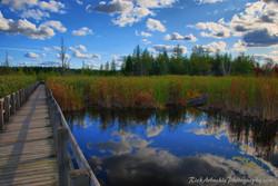 Pathway Into The Marsh