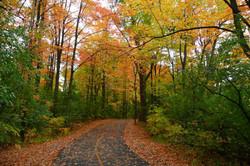 Autumn Stroll.jpg