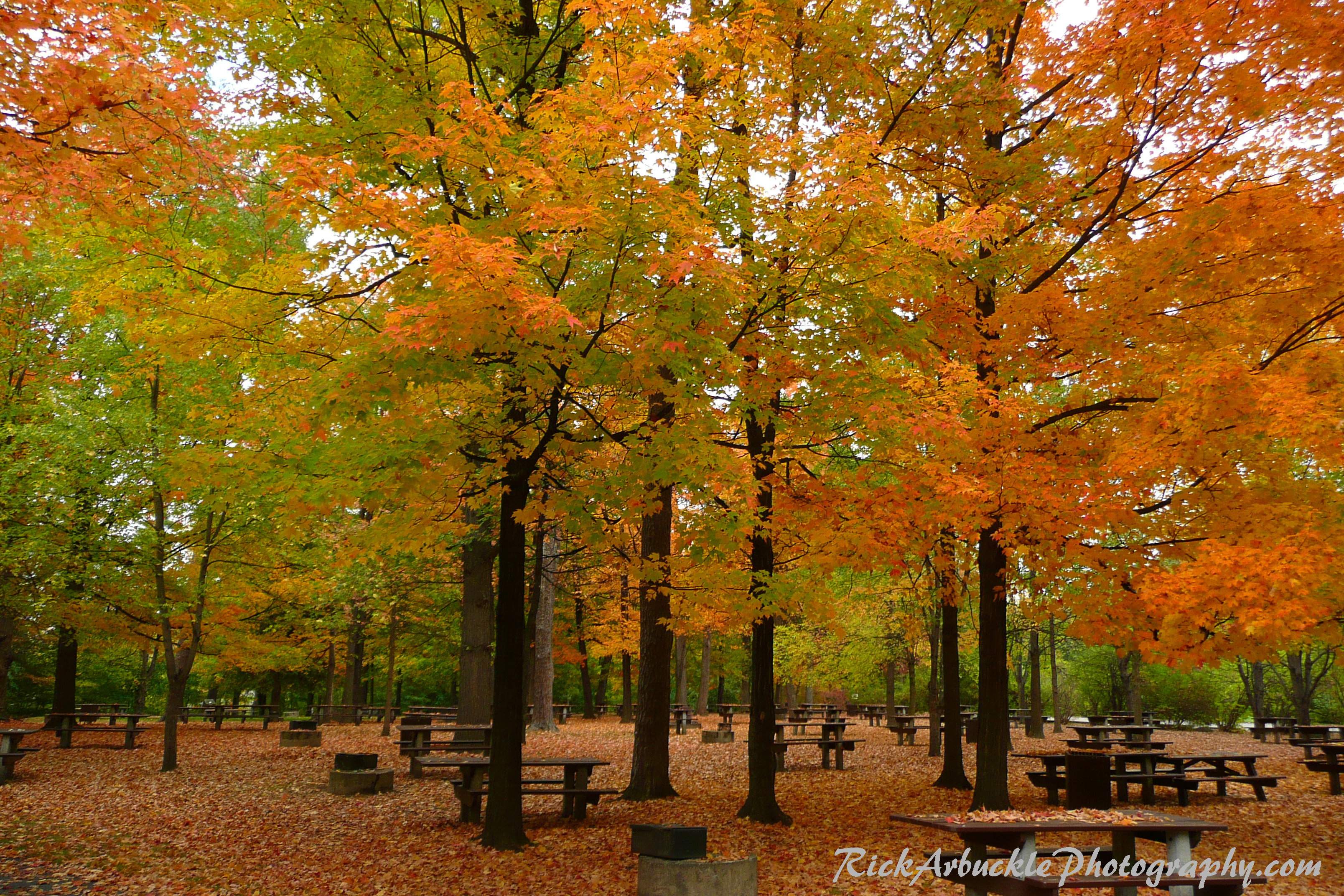 Autumn Picnic Area