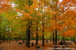 Autumn Picnic Area