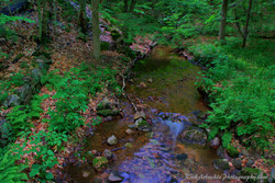 A Small Brook.jpg