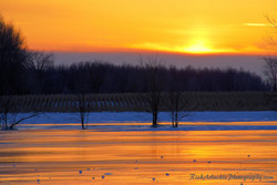 Orange Sky Over A Winter Cornfield