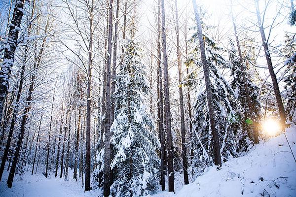 winter forest sunshine