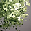 Thumbnail: Pastel Green