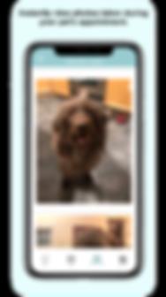 loupetville apple store iphone app louisville pet sitter dog walker