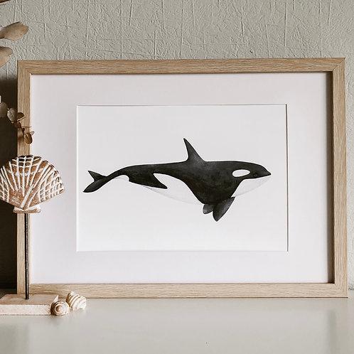 KORA ORCA PRINT A4
