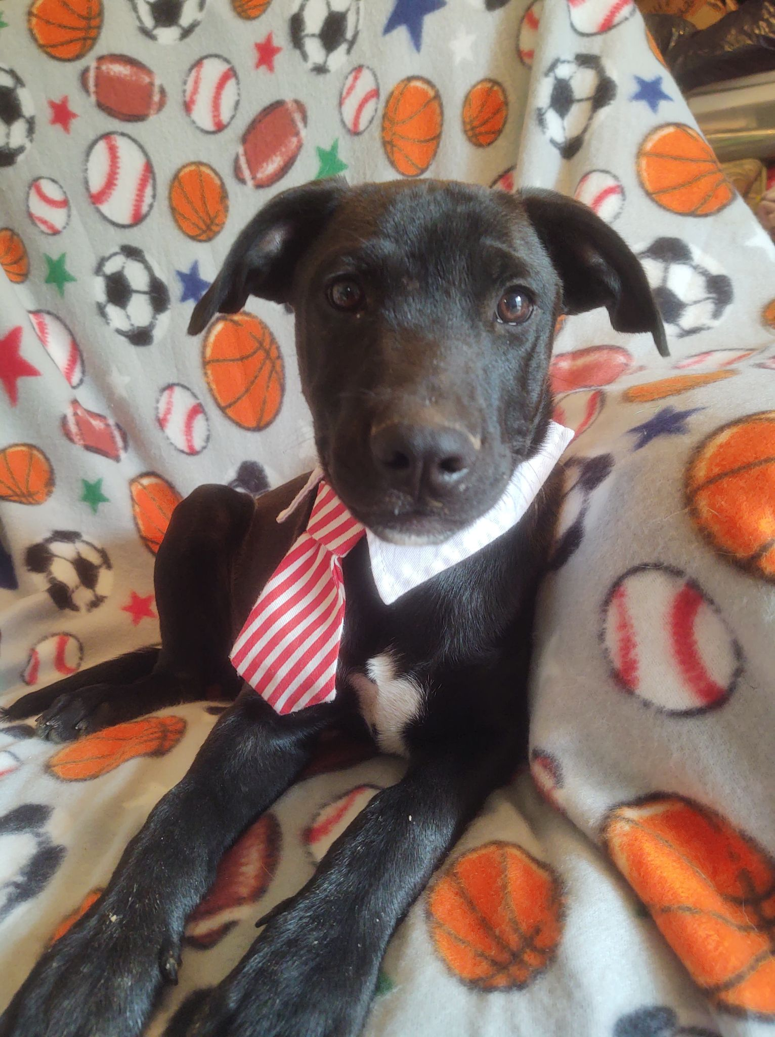 Woody-Lab mix-male