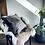 Thumbnail: Wilderbeest Square Cushion