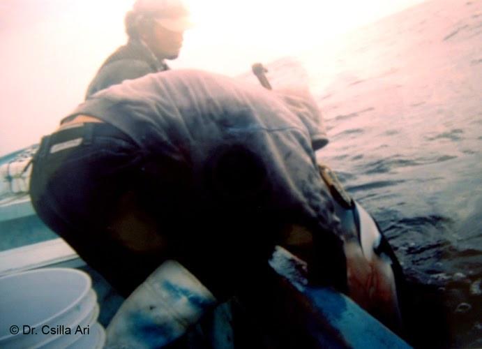 hunting01.jpg