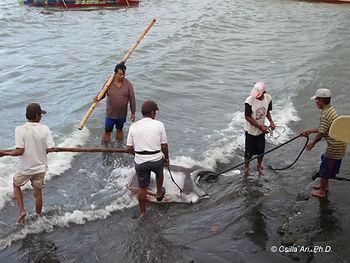 Manta Fishing Village in Indonesia