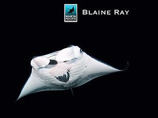 Adopt Blaine Ray today!
