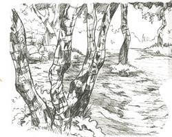Birch Trees Study