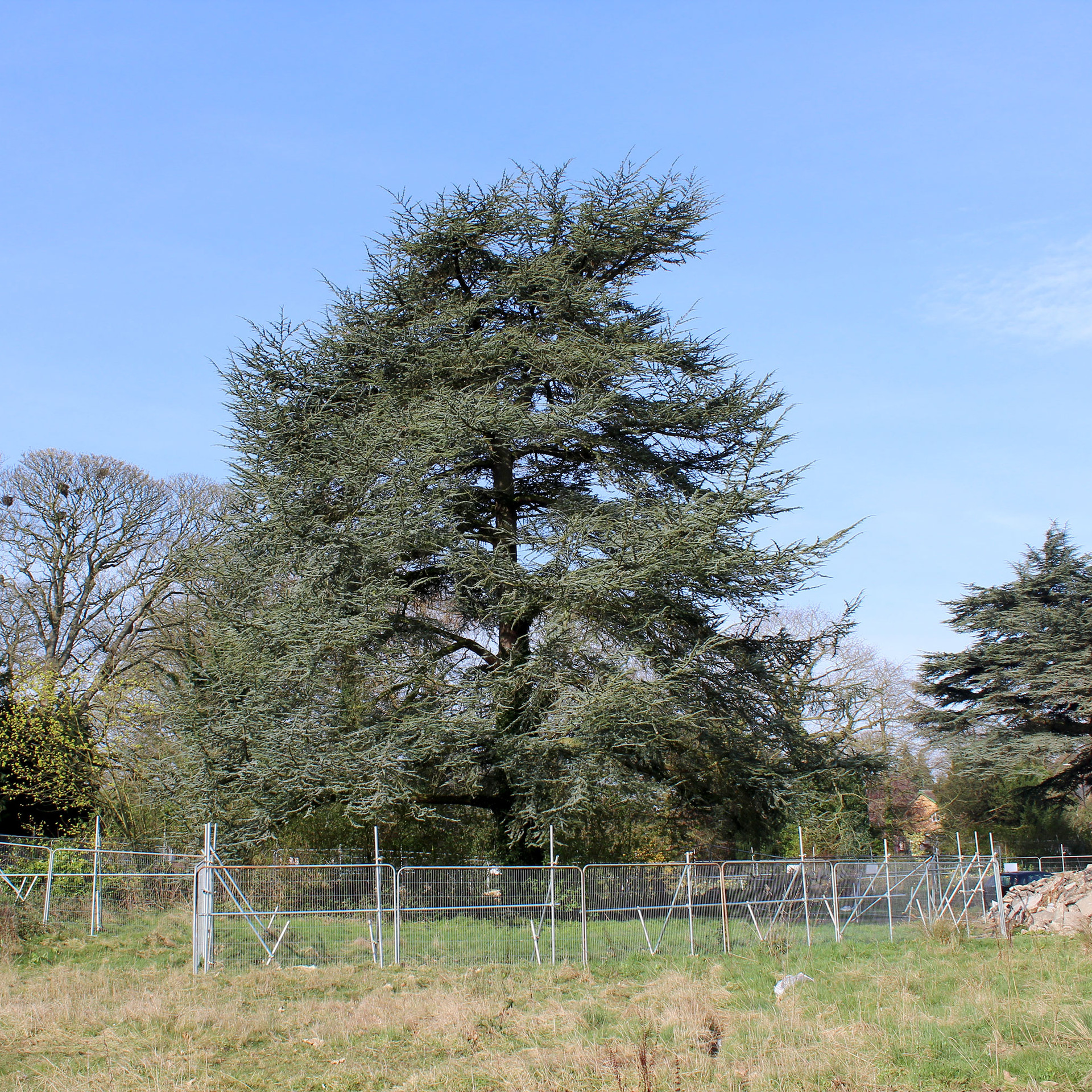 Tree Protection Plans