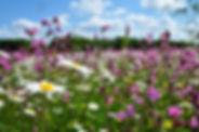 Smeeden Foreman meadow.JPG