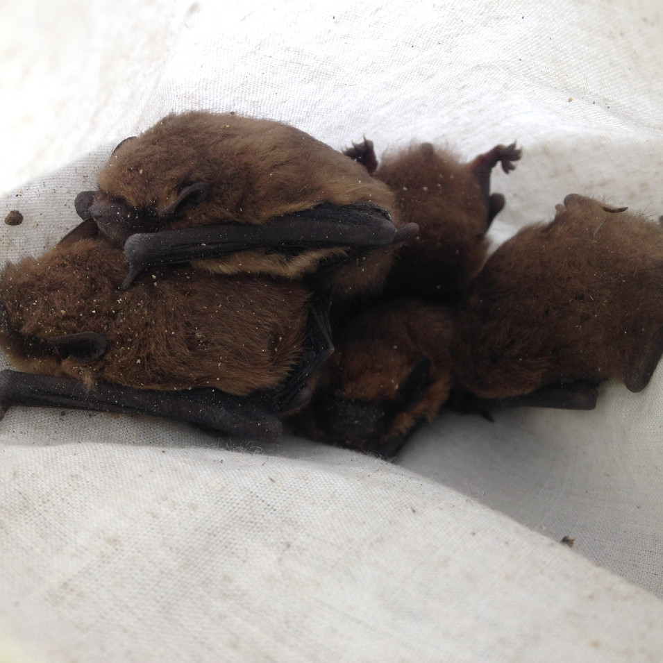 Bag of bats JM.JPG