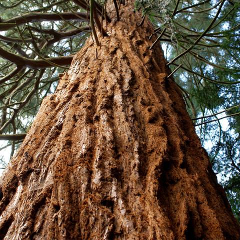 Arboricultural Impact Assessment