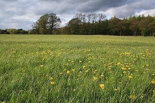 grassland MG.jpg