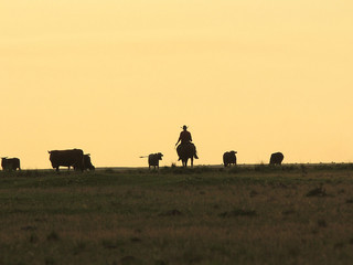 A PROPÓSITO DEL CAMBIO CLIMÁTICO: La solar abastecerá de agua a ganaderías en épocas de sequía en Cu