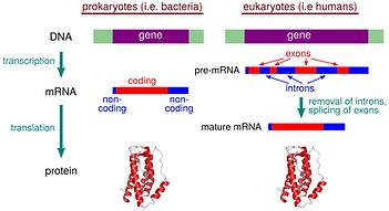 gene_expression.png