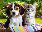 animals 1.jpg