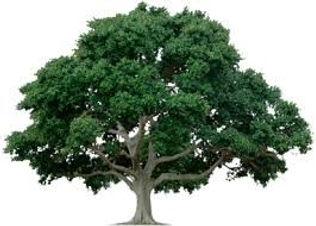 WOPHOA-Tree Logo.jpg