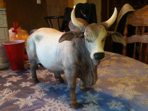 Brahma Bull in Bisque