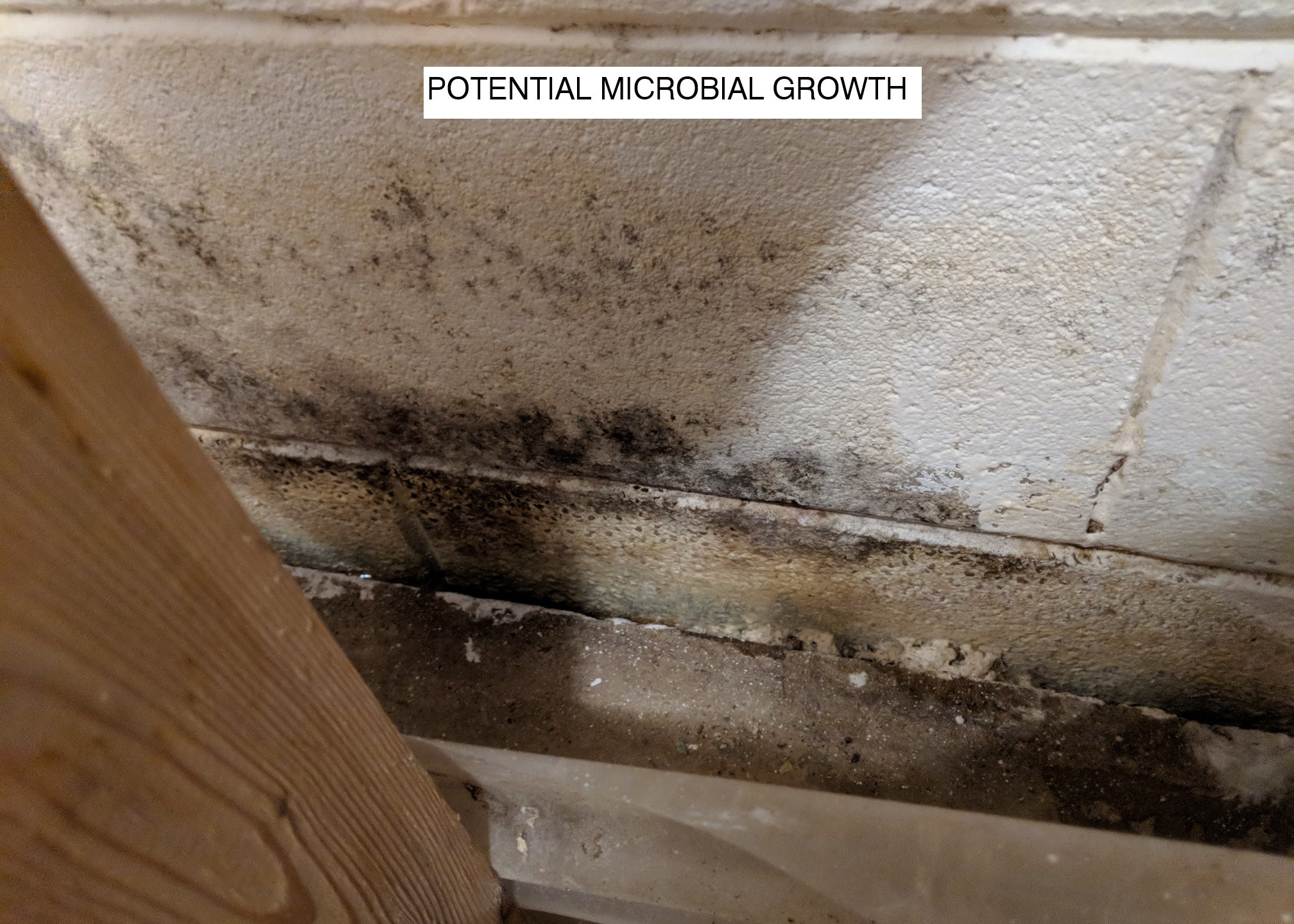 Potential Microbial Growth