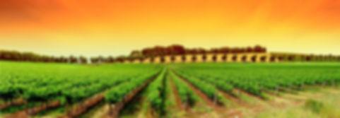 ImplantationauxUSA|WineExportPro|vignes