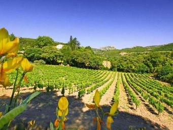 """Le Rousillon, """"Roi de France pour le millésime 2013"""" selon Wine Advocate"""