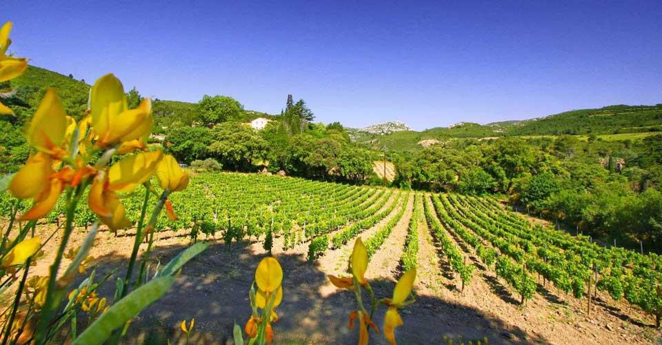 Wine-tasting-France-slider1.jpg