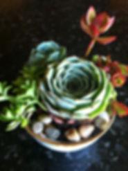 white bowl jagoree01.jpg
